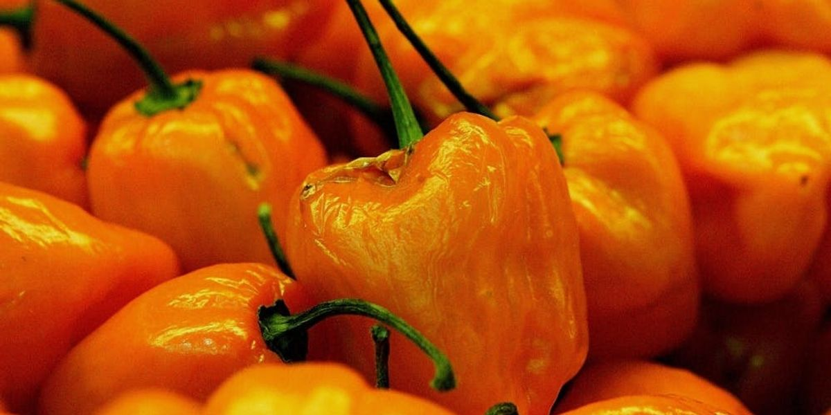 This New Dragon S Breath Pepper Is So Hot It Could Kill You Brit Co
