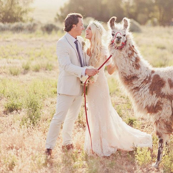 Llamas Are the Furriest New Wedding Trend