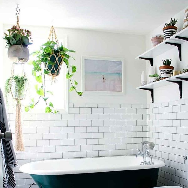 Here's the Latest Low-Maintenance Plant Trend Taking Over Pinterest