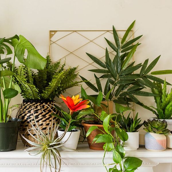 Your Succulents Aren't Just Adorable — They Could Be Good for You