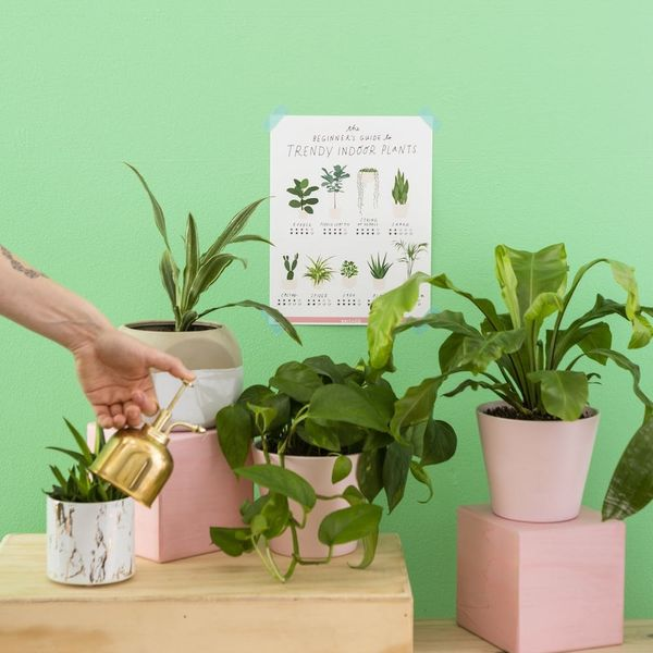 This Indoor Plant Guide Will Help You Reach Jungalow Queen Status in No Time