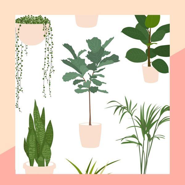 The Beginner's Guide to Trendy Indoor Plants