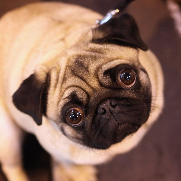 Good News, Fur Mamas: Talking to Your Pet Is a Sign of Intelligence