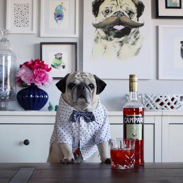 Meet Rocco, the World's First Pugtender