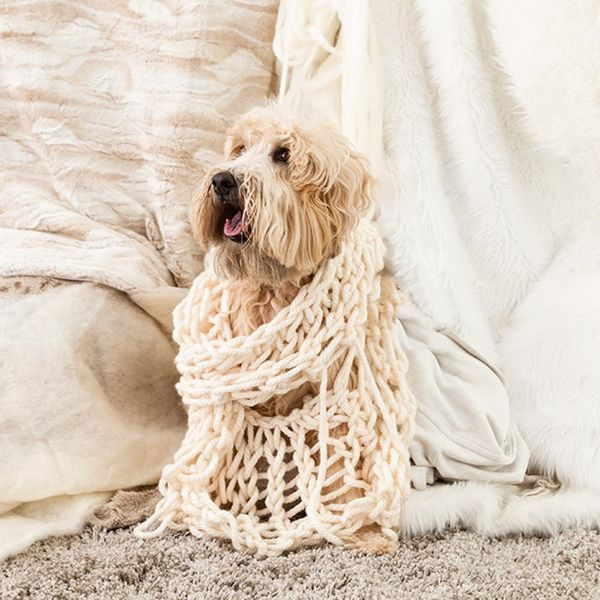 Documenting Daisy: One Photographer's Search for a Dog… on Set