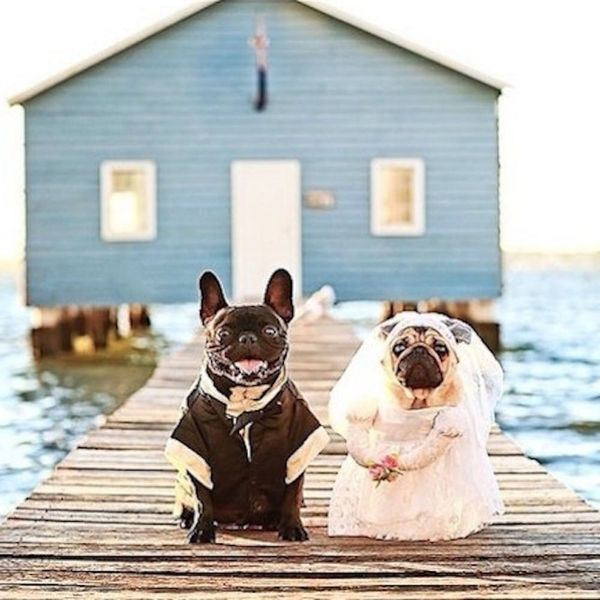 19 Essentials for the Most Adorable Pet Wedding EVER