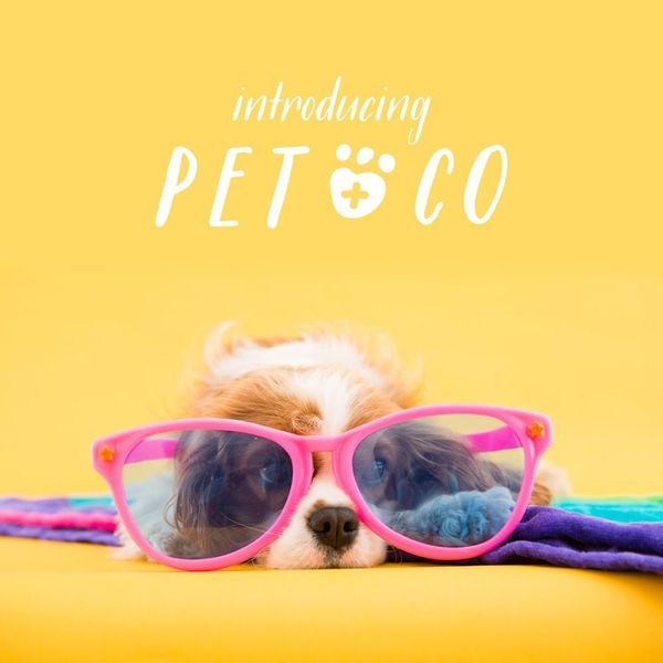 Announcing Our New Site: Pet + Co