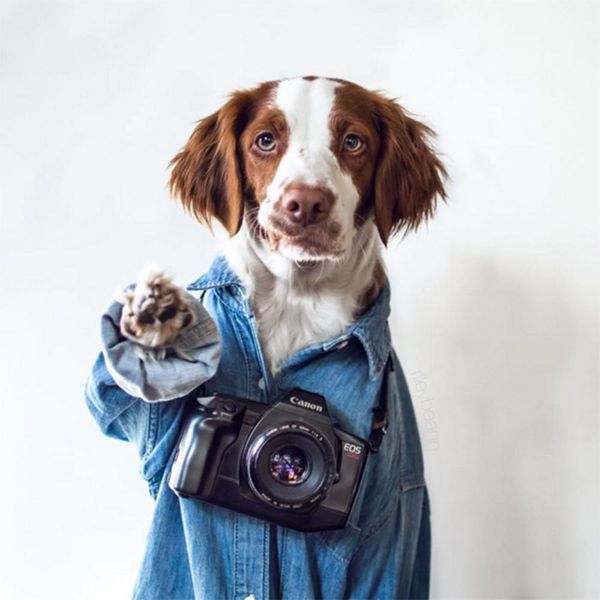 30 Instagram Pets That Lead Cooler Lives Than You