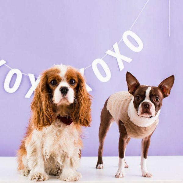 10 Ways to Celebrate National Puppy Day