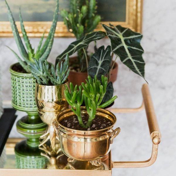 This Blogger's Indoor Garden Collab With Etsy Is #GardenerGoals