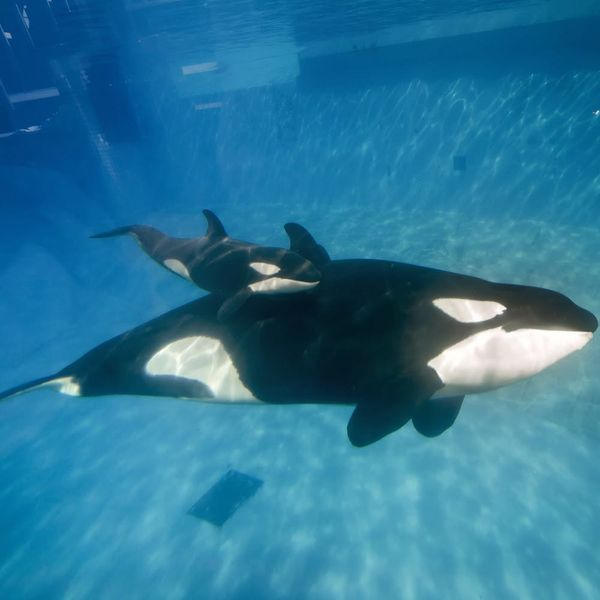 You'll Love the Reason Why SeaWorld Is Ending Its Killer Whale Shows