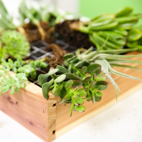 3 Reasons You Need to Learn Succulent Gardening