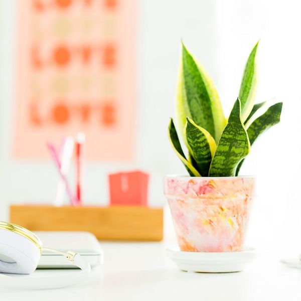 Make This Easy Sharpie Watercolor Planter for Your Office