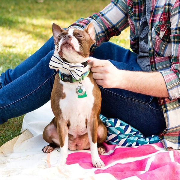 How to Throw a Birthday Party… For Your Dog!