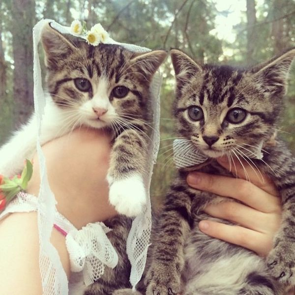 14 Pet Weddings That Give Us All the Feels