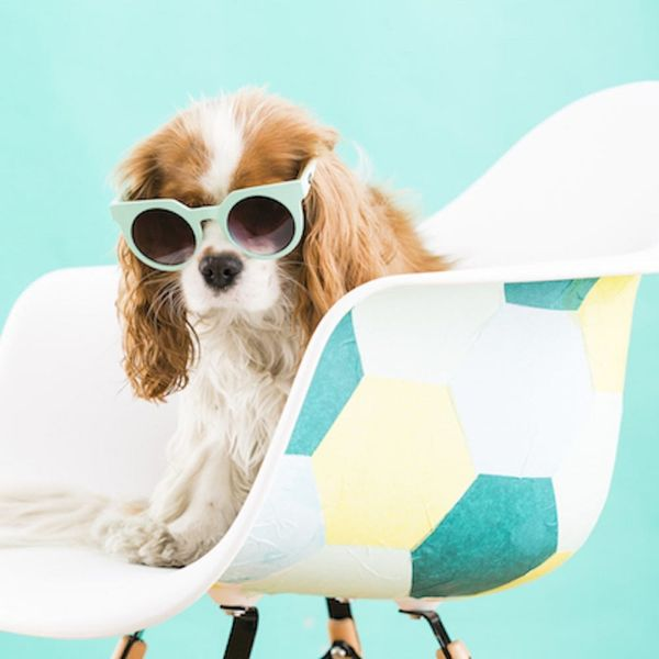 7 Expert Tips for Bringing Fido in on Take Your Dog to Work Day