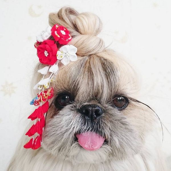 Kuma the Instagram Dog Is About to Become Your New Hair Muse