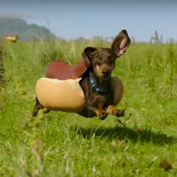 This Heinz Super Bowl Ad Is the Cute Dog Commercial You've Been Waiting For