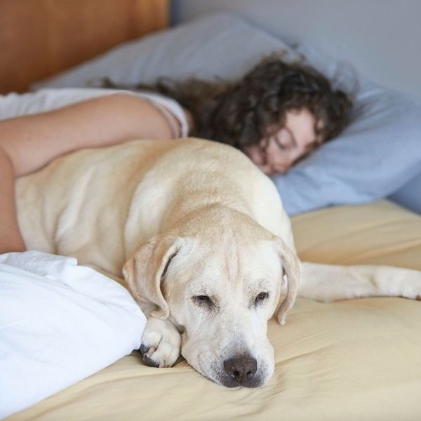 This Study Shows Just How Your Pet Is Affecting Your Sleep Habits