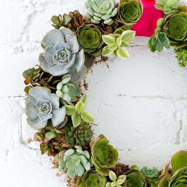 How to Make a Succulent Wreath You Can Hang All Year Round