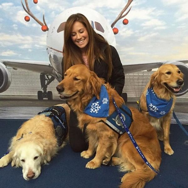 United's Airport Comfort Dogs Are the Best Thing to Happen to Holiday Travel