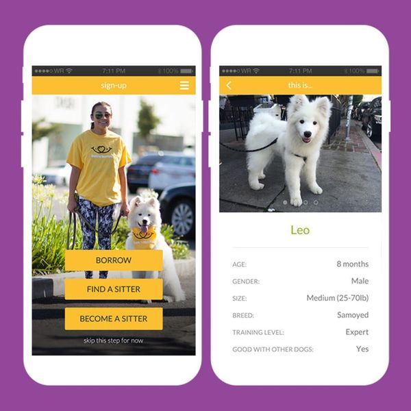 All Dog Owners Need to DL This App Before Their Holiday Travels