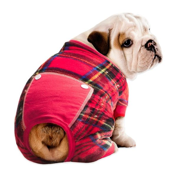 15 Winter Must-Haves for Dogs