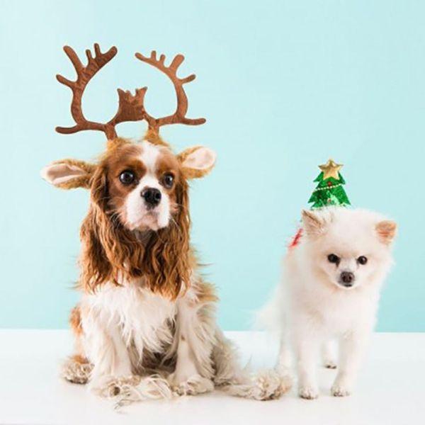 The Best Pet Gift Ideas