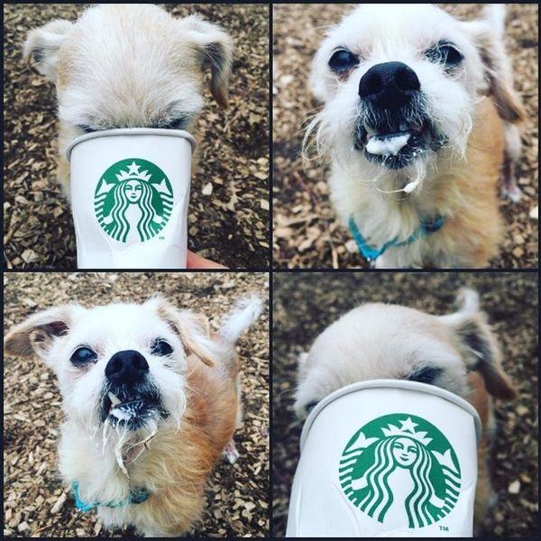 Starbucks Has a Secret Menu Just for Dogs