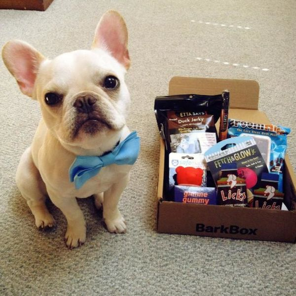 24 Gifts to Get Your Dog for National Dog Day