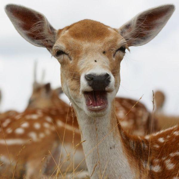 Money, the Donut-Loving Deer, Is This Teen's Best Friend