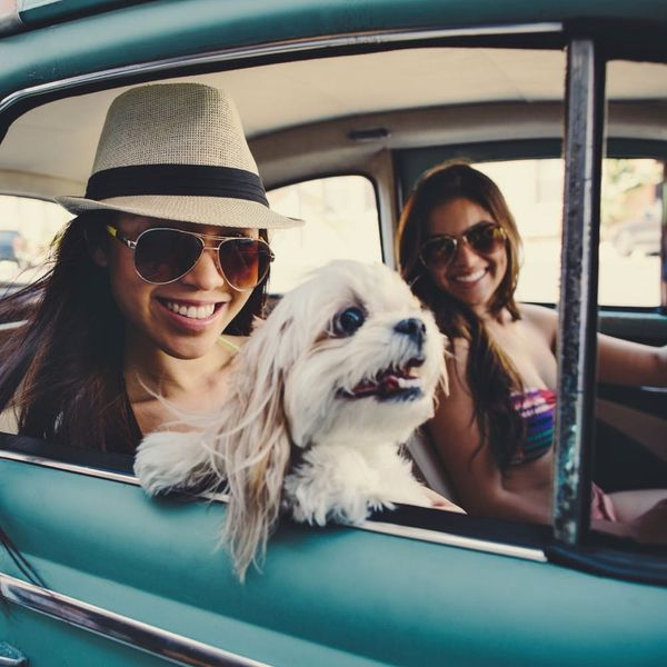 5 Expert-Approved Tips for Traveling With Your Pup