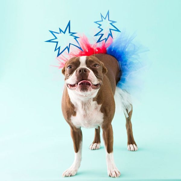 Get Your Pup in the 4th of July Spirit With a Firework Costume