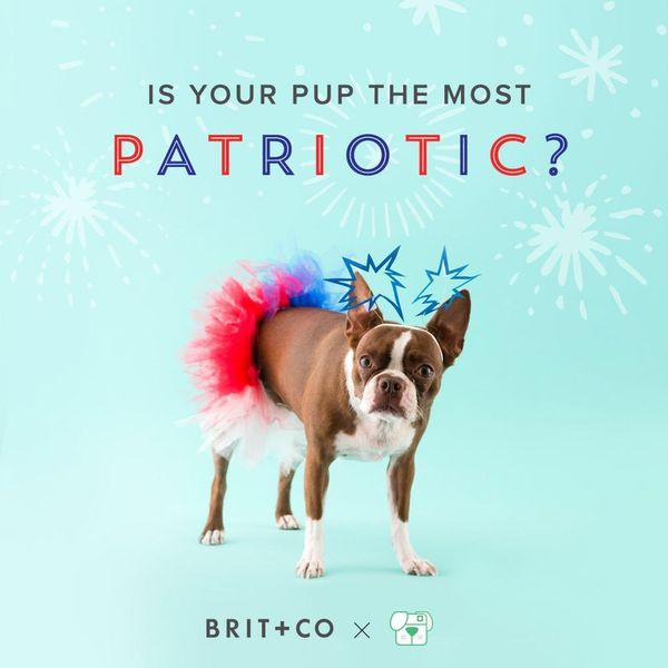 Show Us Your Patriotic Pups to Be Part of Our Snapchat 4th of July!