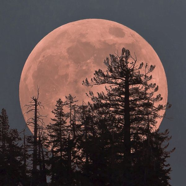 Stay Up Past Your Bedtime Because Tonight's Going to Be a Strawberry Moon