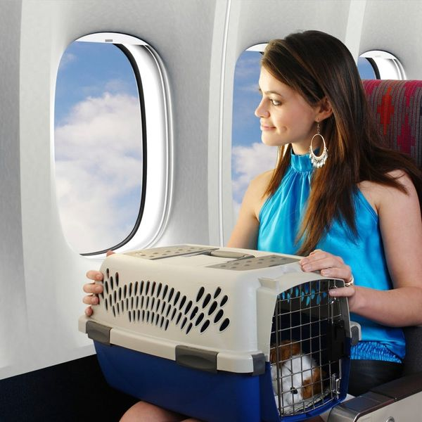 10 Expert Tips for Bringing Your Dog on an Airplane