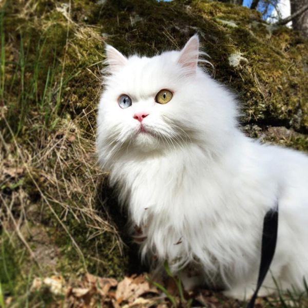 These Adventure Cats Slay the Great Outdoors