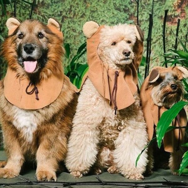 May the 4th Be With You… and These Adorable Dogs in Star Wars Costumes