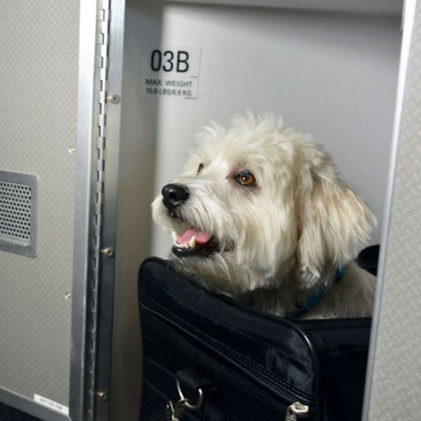 Your Pet Can Now Travel Better Than You on This Airline
