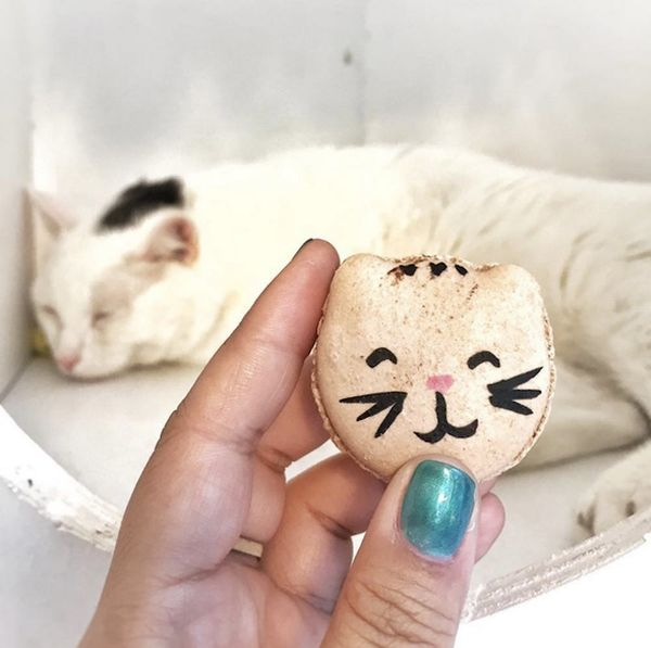 A Cat Yoga Studio Exists AND Serves Cookies