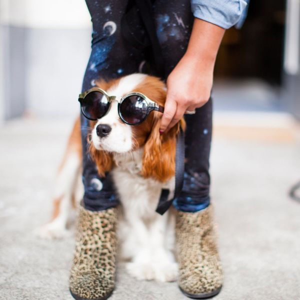 5 Pet-Friendly Airports That Will Pamper Your Pet