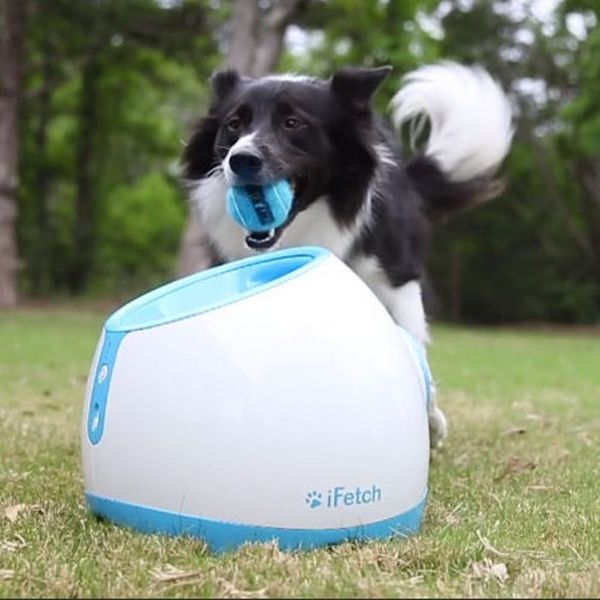This Toy Plays Fetch With Your Dog When You're Not at Home