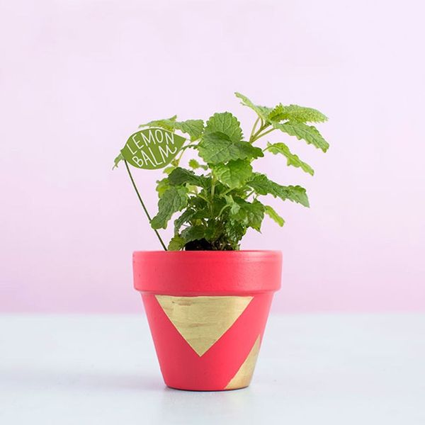 Add Color to Your Herb Garden With DIY Terracotta Pots