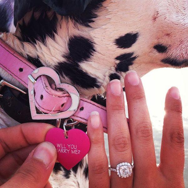 10 Cute + Creative Pet Proposals That Will Make You Melt