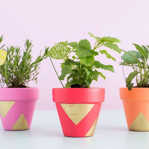 25 Creative Things to Do With a Terracotta Pot