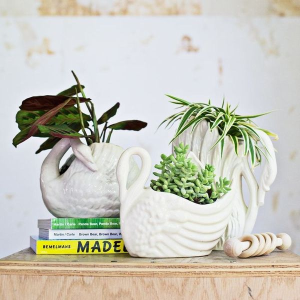 10 Non-Toxic Plants for Your Nursery
