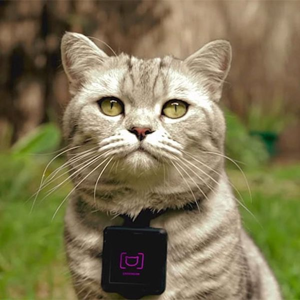 This Is How to Turn Your Cat into an Instagram Star