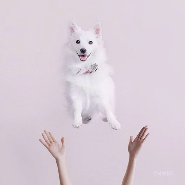 13 Adorable Photo Shoot Ideas… for Your Dog!