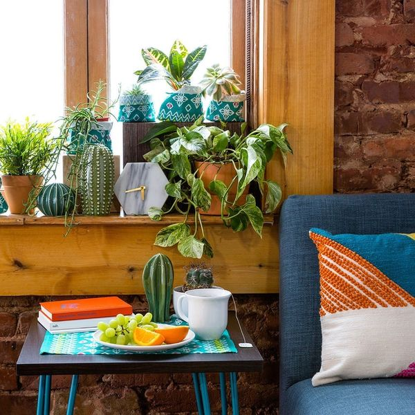 decorate with house plants
