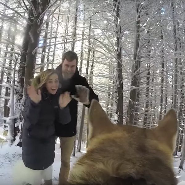 See What Happened When a Couple's Dog Was Their Wedding Videographer